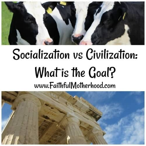 Socialization Cows Civilization Parthenon