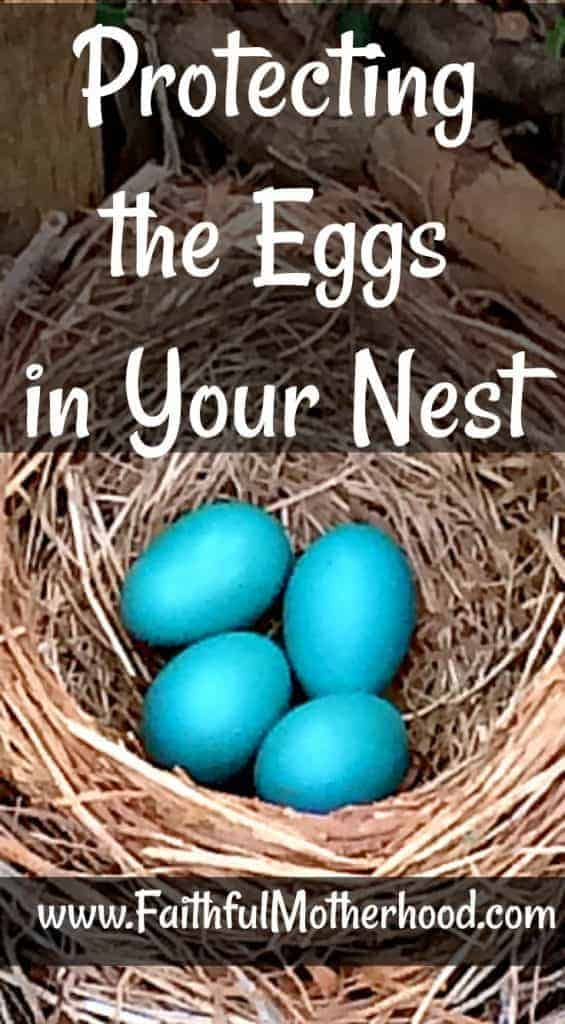 4 Robin Eggs Protecting the Eggs in your Nest