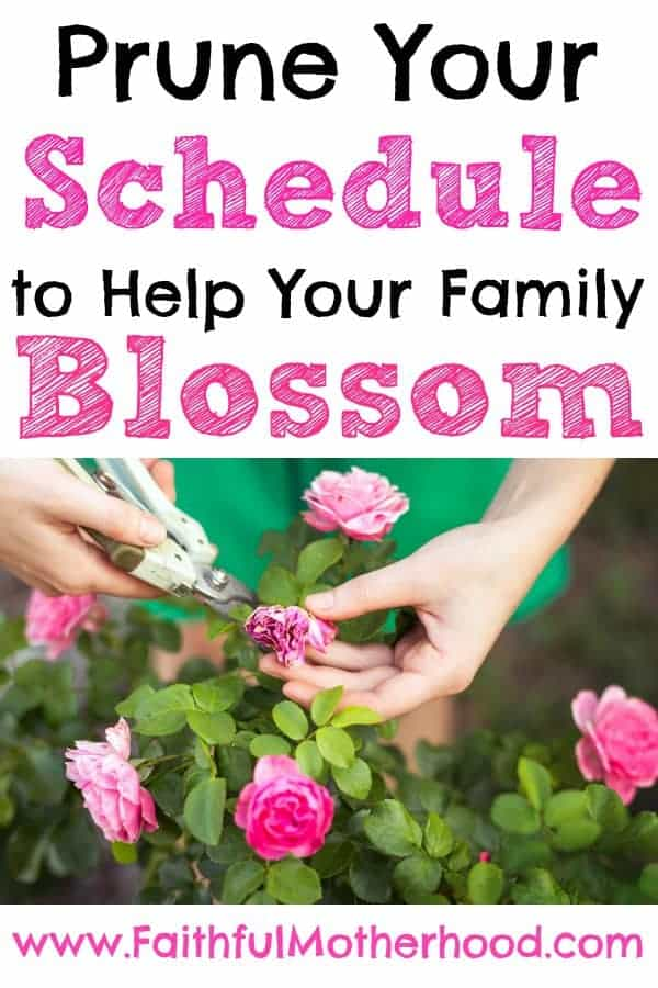 Title: Prune Your Schedule to help your family blossom. Woman in green shirt pruning pink flowers.