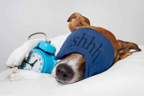 Instead of a tired mom, this is a picture of a sleeping dog.  He is acting like his exhausted mom with an eye mask that says shhh and a paw drapped over a blue alarm clock.